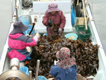 船の上でクロメを巻く作業をする地元の人たち=大分市佐賀関の小黒港