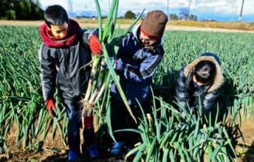 収穫通し苦手克服 食べる楽しさ体感 病院と農業(下)