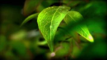 白洋淀に押し寄せるグリーンの春潮 河北省雄安新区