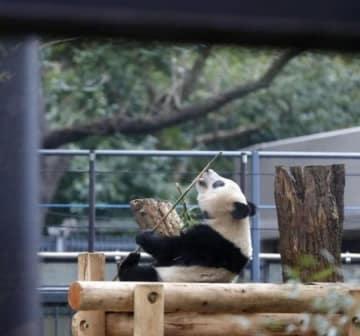 帰らないで!パンダのシャンシャン6月にも中国に、別れ惜しむ日本の人々―中国メディア