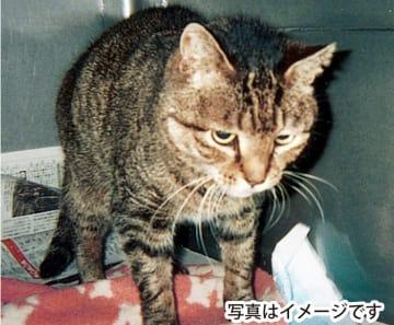 「不幸な猫」を減らそう 無料で不妊去勢手術 30匹に