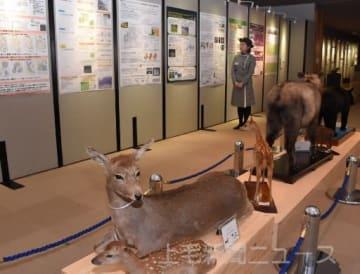 群馬の自然 「いま」の姿 42団体特別展