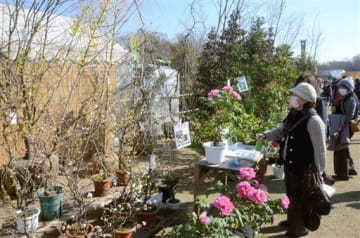 つぼみがほころび始めたウメの木やボタンの鉢植えなどが並ぶ「JA植木まつり」の会場=19日、合志市