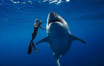 撮影された巨大ザメ=15日、米ハワイ(@JuanSharks/@OceanRamsey/Juan Oliphant/oneoceandiving.com、ロイター=共同)