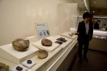 相双地方で見つかった多様な化石を紹介する特別展