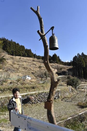 クリの木に取り付けられた半鐘=上勝町生実