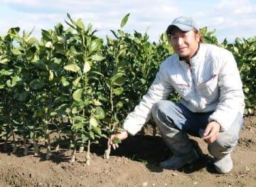 ミカン苗木生産 日本一 久留米市田主丸町 全国シェア77% 愛媛など主要産地に出荷 [福岡県]