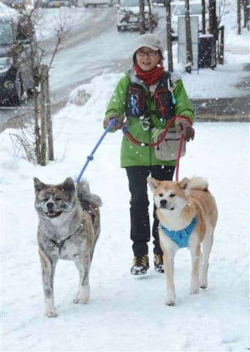 路上で倒れている人を発見した秋田犬の「天」(右)