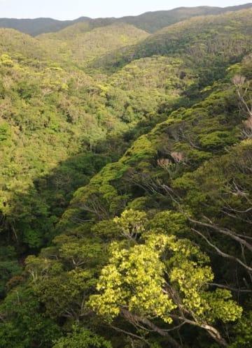(資料写真)やんばるの森