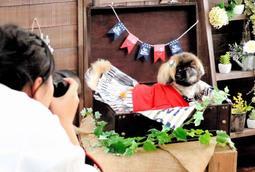 りりしいはかま姿で写真に納まる女性の愛犬ピロ=洲本市海岸通2