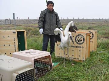 絶滅危惧種の渡り鳥16羽、鄱陽湖で放鳥 江西省南昌市