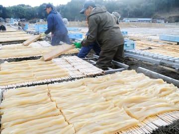台の上に寒天を並べる従業員=23日午前8時30分、恵那市山岡町