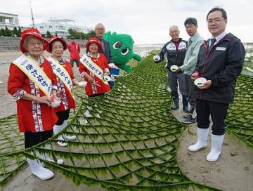 沖縄の海草と言えばこれ! 磯の香りたっぷりの「アーサ」 北中城で初摘み式