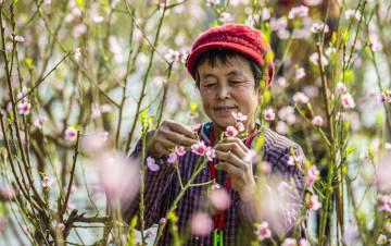 春の雰囲気があふれるハウス果樹園 河北省武邑県