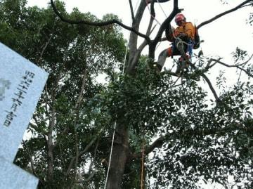 墓のすぐ横にある樹木を伐採する作業員