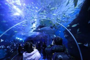 海洋世界で冬休みを楽しむ 貴州省貴陽市