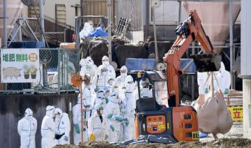 豚コレラの陽性反応が出た養豚場で進む殺処分などの防疫作業=29日午前10時46分、岐阜県各務原市
