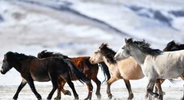 千年の歴史を持つ馬場の雪景色