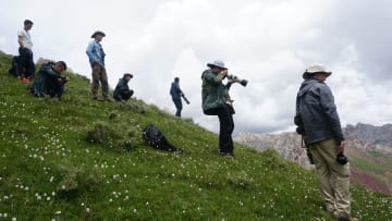 三江源国家公園、全面調査で重点保護植物33種を発見