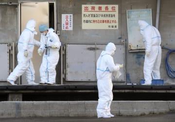 豚コレラが発生した岐阜県各務原市の養豚場が豚を出荷していた岐阜市の卸売市場で行われる防疫作業=29日午後4時24分