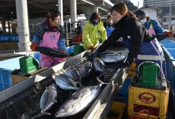 今年初水揚げされたカツオ。漁業関係者が大きさごとに選別した=30日、勝浦市