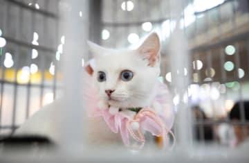 ペット展が人気 広がるビジネスチャンス 湖北省武漢市