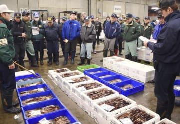函館市水産物地方卸売市場で行われたスルメイカの競り=2018年11月、北海道函館市