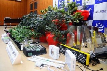県警が押収した大麻草や栽培道具