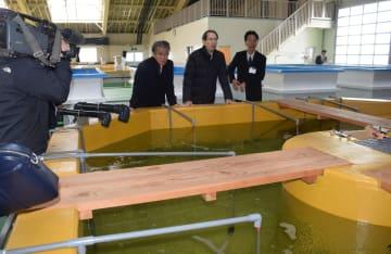 ヒラメ・アユ稚魚飼育棟を見て回る内堀知事(左から2人目)ら