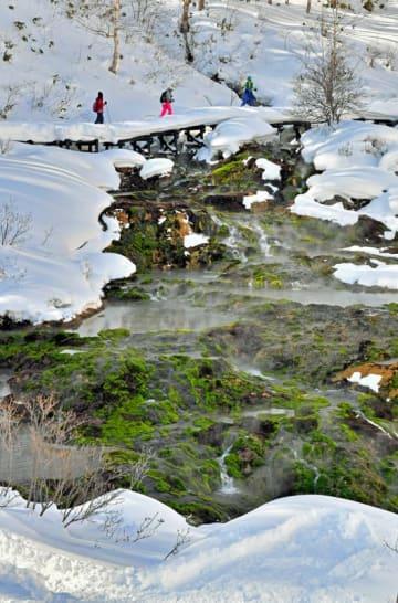 中之条町のチャツボミゴケ公園