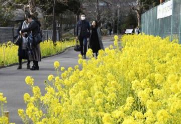 気温が上昇し、菜の花が咲く東京・日比谷公園を散歩する人たち=3日午後