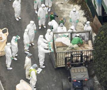 豚コレラの感染が確認された愛知県豊田市の養豚場で処分される豚=6日午後1時11分(共同通信社ヘリから)
