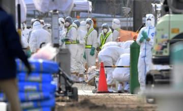 豚コレラの感染が確認された愛知県豊田市の養豚場で続く殺処分などの防疫作業=7日午前