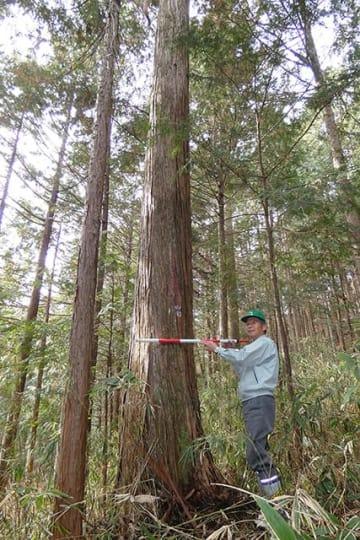 候補に選ばれた樹齢100年を超える東濃桧を紹介する内木篤志組合長=7日午前、中津川市加子母
