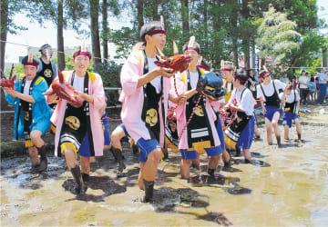 福島県会津美里町の御田植祭で、獅子頭を手に素足で神田に入り、代かきをする「田あらし」=2015年(会津美里町提供)