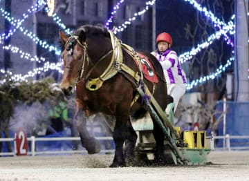ばんえい競馬史上最多の19連勝に並んだホクショウマサル=10日、北海道帯広市の帯広競馬場(主催者提供)