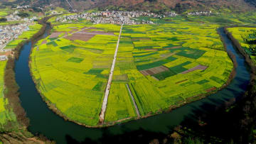 春を呼ぶ満開の菜の花 雲南省羅平県