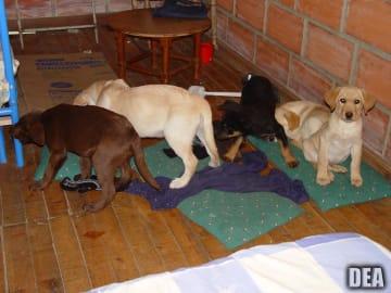 保護された子犬たち(photo: DEA)