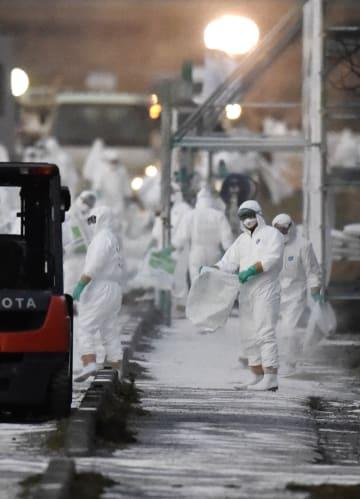 相次いで豚コレラが発生した愛知県田原市の養豚場周辺で石灰をまく防護服の作業員=14日午後5時45分