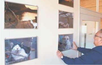 17日の開所に向けた準備が進む「おおいた動物愛護センター」