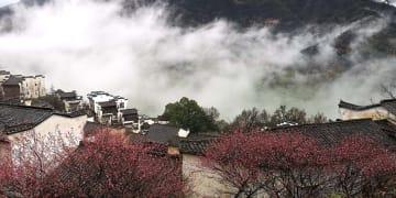 霧に包まれた村落で梅の花が満開 江西省婺源県