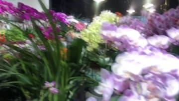 バレンタインデーで生花市場活況、輸入バラが人気 上海