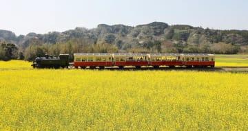 菜の花畑の中を走る里山トロッコ列車=昨年3月、市原市