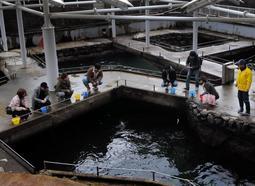 城崎マリンワールドの人気施設「アジ釣り」の池。土日になると親子連れやカップルが大勢詰めかける=豊岡市瀬戸