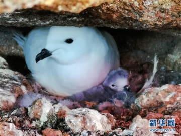 南極のカモメ、中国が初めて赤外線カメラで自動観測―中国メディア