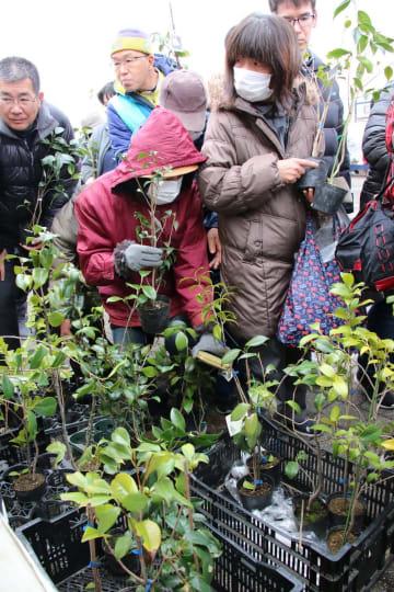 人気を集めたツバキの苗の無料配布コーナー=五島港公園