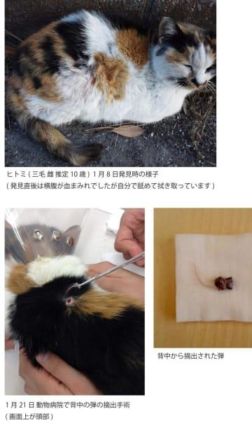 ボランティアが作成した資料。鉛弾が背中などに埋まっていた雌猫「ヒトミ」(上)と、摘出された鉛弾(右下)