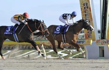 第36回フェブラリーステークスを制した武豊騎乗のインティ(6)。左は2着のゴールドドリーム=東京競馬場