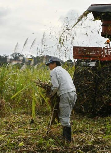 サトウキビの収穫作業に追われる農家の男性=18日午後4時ごろ、糸満市与座(田嶋正雄撮影)