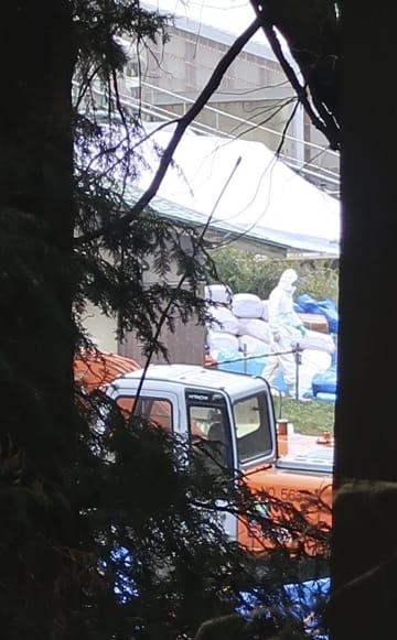 新たに豚コレラが発生した岐阜県瑞浪市の養豚場で行われる作業=19日午前